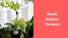 buzla orkide sulama Gardening, Home Decor, Decoration Home, Room Decor, Lawn And Garden, Home Interior Design, Home Decoration, Horticulture, Interior Design