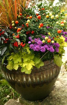 "A good example of the ""filler, thriller, spiller"" idiom of container gardening. The ornament pepper is the thriller, the little purple flowers are the filler (ageratum?), while the sweet potato vine is the spiller. As long as you remember those three elements, you can have a wonderful container garden."
