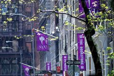 NYU was my dream college from the age of 8 on. It is frustrating at times, but mostly has beyond lived up to my expectations :)