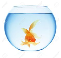Bocal poisson rouge google search couv pinterest for Bocal a poisson prix