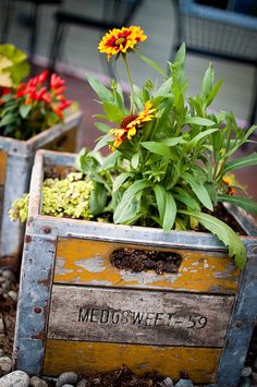 Old crates for planters! Container Flowers, Container Plants, Container Gardening, Garden Junk, Garden Planters, Flower Planters, Outdoor Plants, Outdoor Gardens, Old Crates