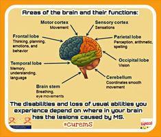 Multiple Sclerosis Quotes, Motor Cortex, Occipital Lobe, Frontal Lobe, Brain Stem, Arithmetic, Perception, How To Plan