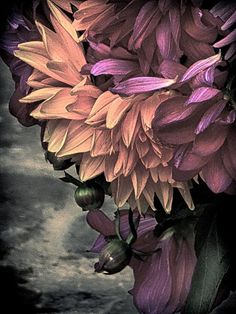 From the Market - Colour photograph of street Flowers by John Claridge offered in two sizes as a limited edition, signed and numbered archival pigment print (unframed). Antiques Online, Selling Antiques, Dc Photography, Galleries In London, Black N White Images, Dark Colors, Rock And Roll, Flora, Street
