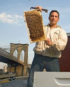 Back yard beekeeping, coming to LundeenScene Spring 2015!
