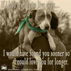 Oh, my sweet Emery... this is you and I! So glad you came into my life at age 10! #adoptdontshop #seniorsrock #mhwr