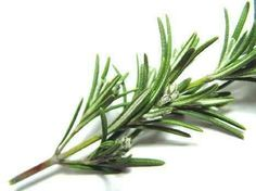 Rosemary:  burn rosemary to rid your home of negative energy, or as an incense while you meditate. Hang bundles on your front door to keep harmful or negative people from entering. Stuff a healing poppet with dried rosemary to take advantage of its medicinal properties, or mix it with juniper berries and burn in a sickroom to promote healthy recovery. In spell work, substitute rosemary for other herbs such as frankincense, if needed.