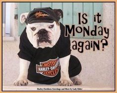 Hate Mondays, love Bulldogs