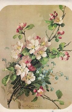 Apple blossoms and forget-me-not, catherine klein decoupage art, flower images Art Floral, Floral Vintage, Vintage Flowers, Vintage Art, Vintage Glamour, Flower Images, Flower Pictures, Flower Art, Peony Flower