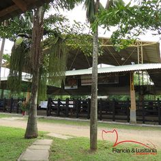 ¡Bienvenidos! #BrahmanRojo #Montería #Ganadería #Colombia #Pasion @asocebu @fedegan #HaciendasFranciaYLusitania