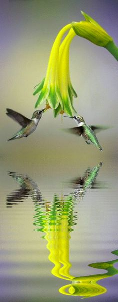 Flying Reflection of Hummingbird so beautiful bird Pretty Birds, Love Birds, Beautiful Birds, Animals Beautiful, Cute Animals, Animals Amazing, Animal Pictures, Cool Pictures, Cool Photos