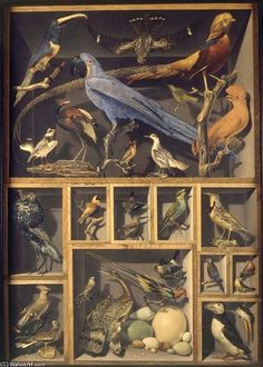 Still Life with Exotic Birds, by Alexandre-Isidore Leroy de Barde Gouache and watercolour Cabinet Of Curiosities, Natural Curiosities, Assemblage Art, Art Graphique, Exotic Birds, Memento Mori, Displaying Collections, Box Art, Art Boxes