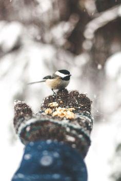 Sweet! By: Jonah Reenders / Snow