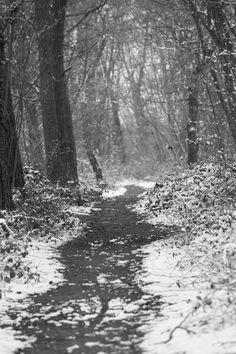 winter in february III