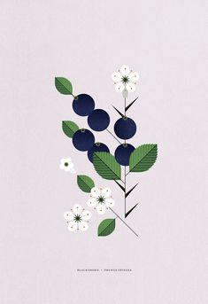 Sally is an Irish born, Dublin based illustrator and designer. Sally's style pairs a gentle aesthetic, with clean graphic lines. Plant Illustration, Graphic Design Illustration, Digital Illustration, Floral Illustrations, Flower Art, Illustrators, Watercolor Art, Drawings, Artist