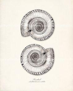 Sea Shell Illustration  Vintage Double por vintagebytheshore