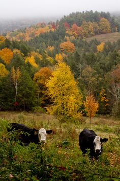 Autumn Countryside by Rikki Snyder Photography