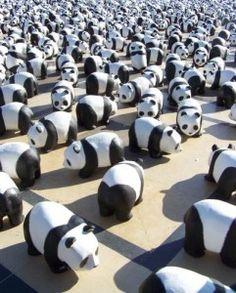 lots of little pandas!