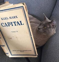 The cat who read Karl Marx Les Miserables, Slytherin, Hogwarts, Karl Marx Capital, I Love Cats, Cool Cats, Flower Yellow, Memes, My Friend