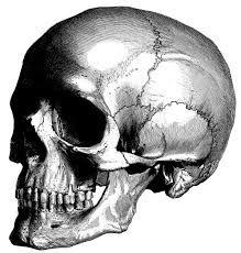 Image result for old anatomy illustrations