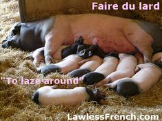 Don't just sit there - read this lesson on the idiomatic French expression faire du lard. French Expressions, French Phrases, French Quotes, French Sayings, French Practice, Learning French For Kids, Idiomatic Expressions, Pig Farming, Animals