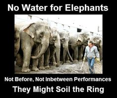 THE CRUELEST SHOW ON EARTH!  One of the egregious things circuses do is deny animals water before and in between performances! It is said they will catheter an elephant to empty her bladder so she cannot urinate during a performance.  BOYCOTT CIRCUSES!  HELP END THEIR SUFFERING!