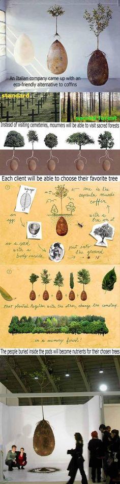 eco friendly alternative to coffins