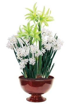 Containers Filled with Spring Bulbs Will Bring Joy to Your Home - Check out the free plant identification mobile app at GardenAnswers.com