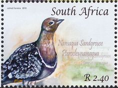 Namaqua Sandgrouse stamps - mainly images - gallery format