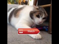 😸 Crazy And Funny Cat 😼 😽 on Pet Lovers 😻
