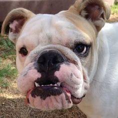 Nikki - Road Dogs & Rescue @roadogs Instagram photos | Websta (Webstagram)