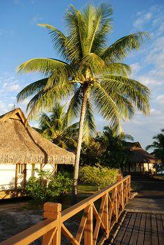 Moorea Island Intercontinental Resort