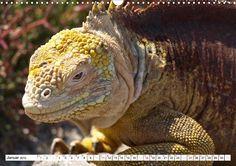 Tierische Begegnungen - CALVENDO Kalender - www.calvendo.de/galerie/tierische-begegnungen/ - #tierkalender #calvendo