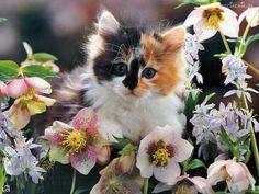 Kotek, Kwiatki