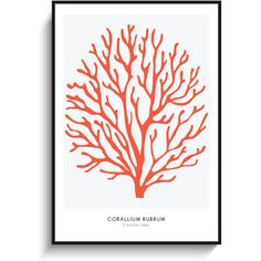 Red Coral Large Poster PRINTABLE FILE. Red Sea Coral Print. Coral... (€9,03) ❤ liked on Polyvore featuring home, home decor, wall art, red coral home decor, red home accessories, red wall art, beach scene posters and beach wall art