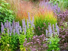 This perennial garden bed features spiky purple salvia and other drought-tolerant plants, including grasses and ground cover, for a lovely mix of colors and textures.