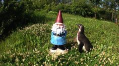 If I'd known my visit with the @tozookeepers was a black tie affair, I would've packed my tux. #GnomeWisdom