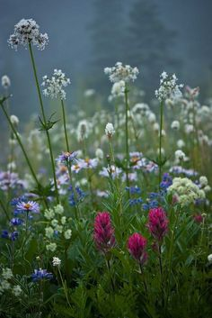 Etwas anderes - ༻my dream of a wildflower cottage in the meadows with flowers and big nature - Meadow Flowers, Wild Flowers, Beautiful Flowers, Alpine Flowers, Plantation, Dream Garden, Garden Inspiration, Beautiful Gardens, Mother Nature