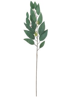 Looking for artificial wedding greenery to fill your bridal bouquets and centerpieces? Check out this beautiful, faux eucalyptus spray in green. These elegant eucalyptus leaves are a great way to accent your DIY arrangements with a natural look. Artificial Flowers And Plants, Fake Flowers, Dried Flowers, Silk Flowers, White Flowers, Eucalyptus Leaves, Eucalyptus Wedding, Silk Plants, Floral Supplies