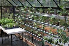 Glashaus bauen Gewächse anzüchten bauen-Stecklinge Regalsystem Kasten