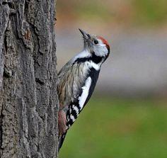 Téli madaraink - madarlesok.lapunk.hu