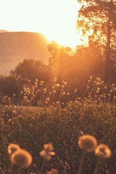 Enchanting Sunshine