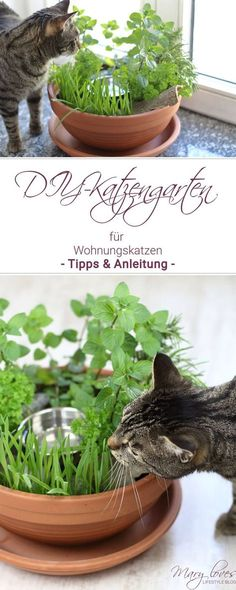 [Anzeige] DIY-Katzengarten für Wohnungskatzen - #katze #katzengarten #katzenkräuter #wohnungskatze #diykatzengarten #katzendiy #diy