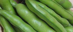 Compost Trial: Growing Broad Beans - Pumpkin Beth