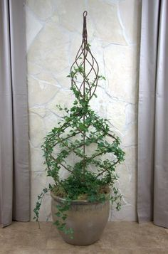 topiary indoor plants ideas - Google Search