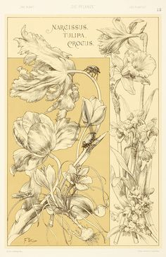 Flower studies. Art nouveau