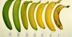 Consumir banana tem uma série de vantagens, graças aos nutrientes que elas possuem: A serotonina, enzima presente na composição da banana, ajuda a combater estados depressivos e de ansiedade, pois atua como relaxante e promotor de bom humor. O ferro é outro componente de grande importância que…