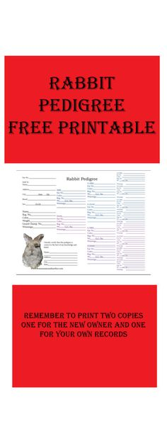 A Birth Certificate For A Bunny Rabbit Illustrated With Rabbits And