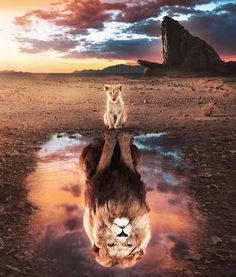 The Lion King 🦁 Tag your creative friends! Edit photo … The Lion King 🦁 Tag your creative friends! Photo edited by @ … – The Lion King 🦁 Mark your creative friends! Photo edited by @ – The Lion King 🦁 Tag your creative friends! Edit photo … The … The Lion King, Lion King Art, Lion King Movie, Lion Art, Disney Lion King, Lion Tattoo King, Lion King Poster, Amazing Animals, Animals Beautiful