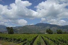 Gepflegte Weinlandschaft bei Tres Palacios/Chile. www.cwc.de