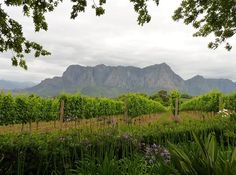 Cape Town, South Africa.  Beautiful vineyards  and great wine tasting opportunities